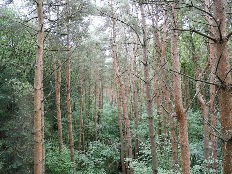 Salcey Forest in Northamptonshire   Taylor Hearts Travel
