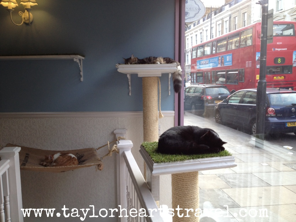 Cat Cafe In London England
