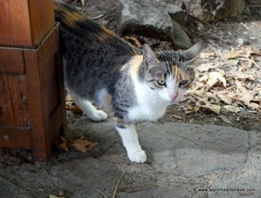 Cats, Troodos Mountains, Cyprus, Cat, Kitten, #VisitCyprus