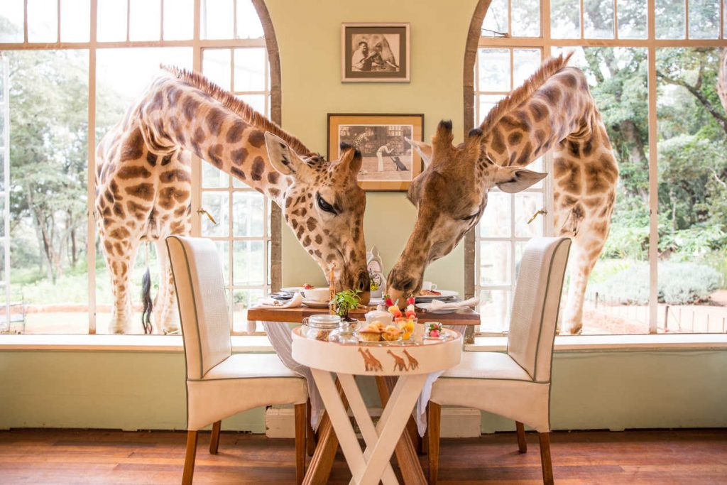 Giraffe Manor, Giraffe Manor Review, Giraffe Hotel, Family Travel. Best Family Holidays, Family Holiday destinations