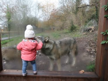 Port Lympne - Wolf Lodge - Review (127)